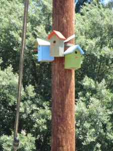 birdhouses on utility pole